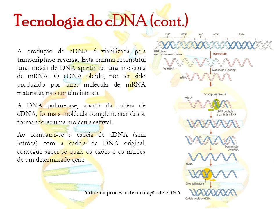 Tecnologia do cDNA (cont.)
