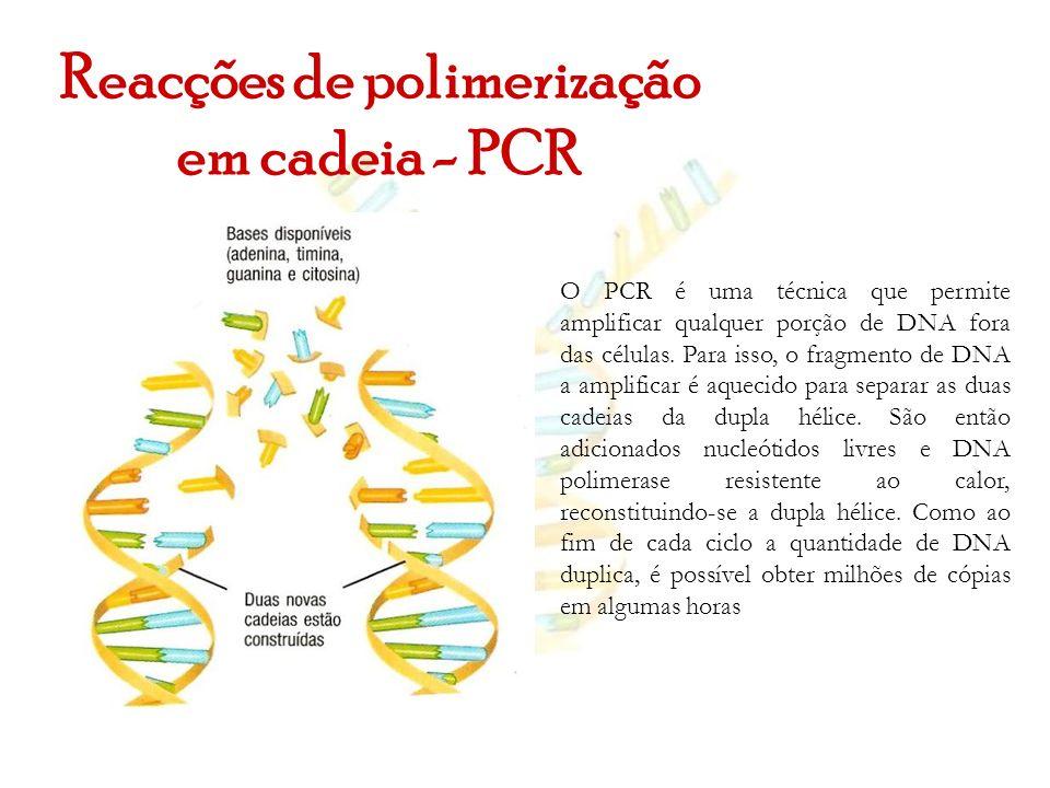 Reacções de polimerização em cadeia - PCR