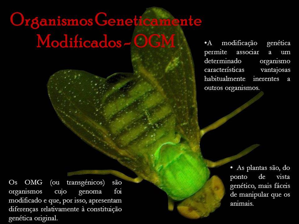 Organismos Geneticamente Modificados - OGM