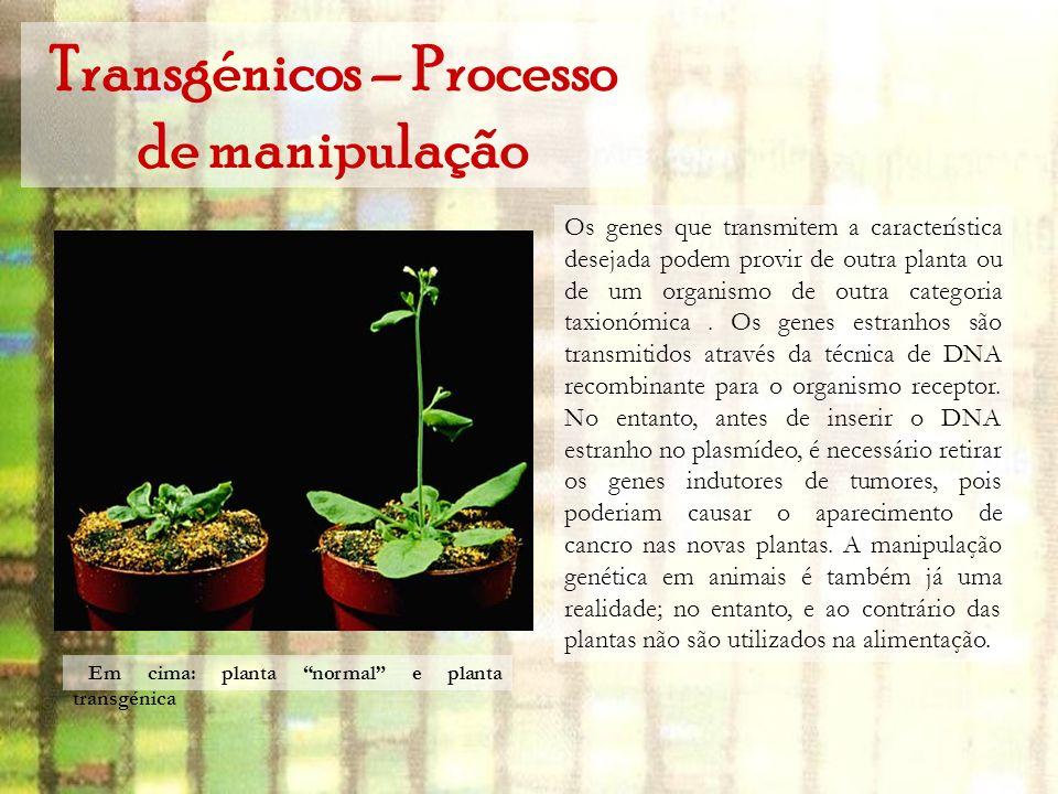 Transgénicos – Processo de manipulação