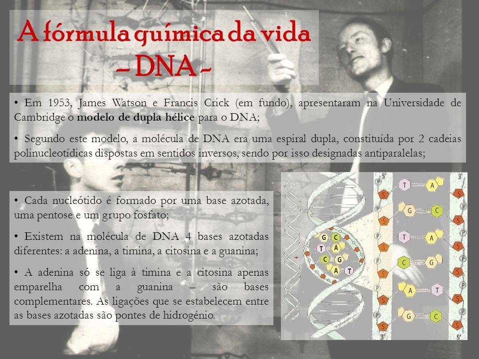 A fórmula química da vida – DNA -