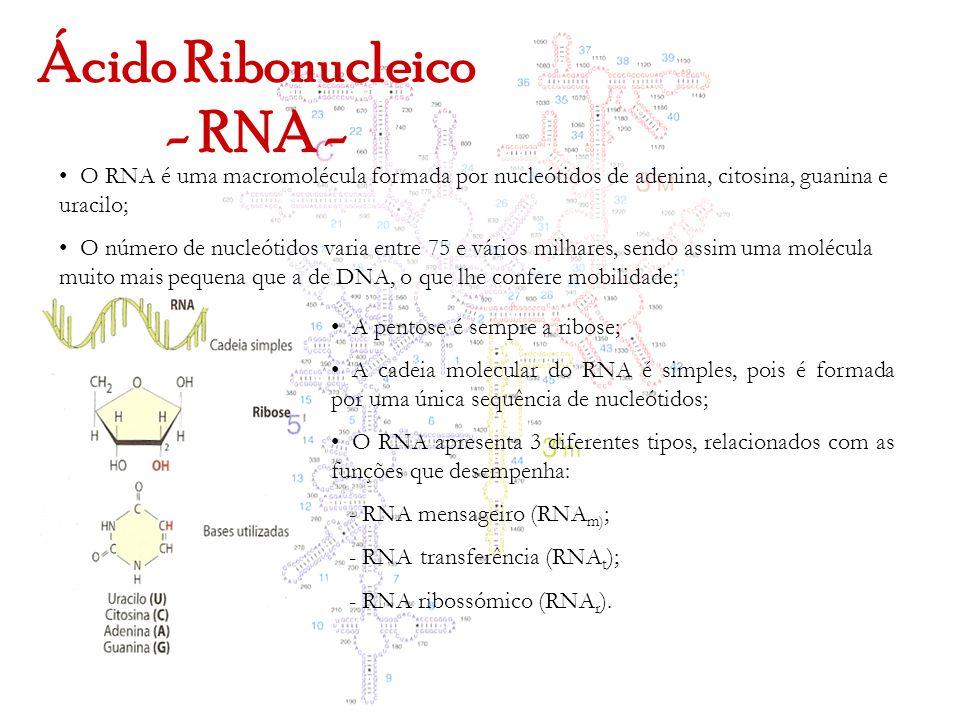 Ácido Ribonucleico - RNA -