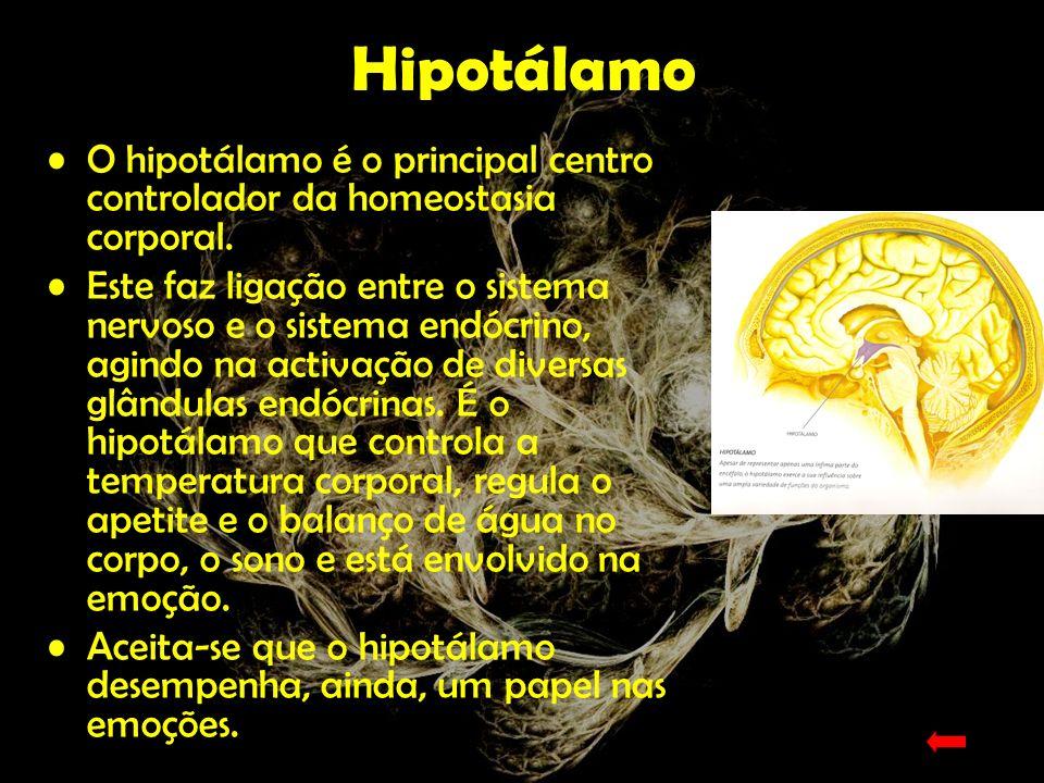 HipotálamoO hipotálamo é o principal centro controlador da homeostasia corporal.