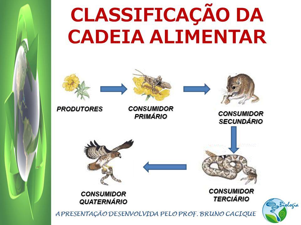 CLASSIFICAÇÃO DA CADEIA ALIMENTAR
