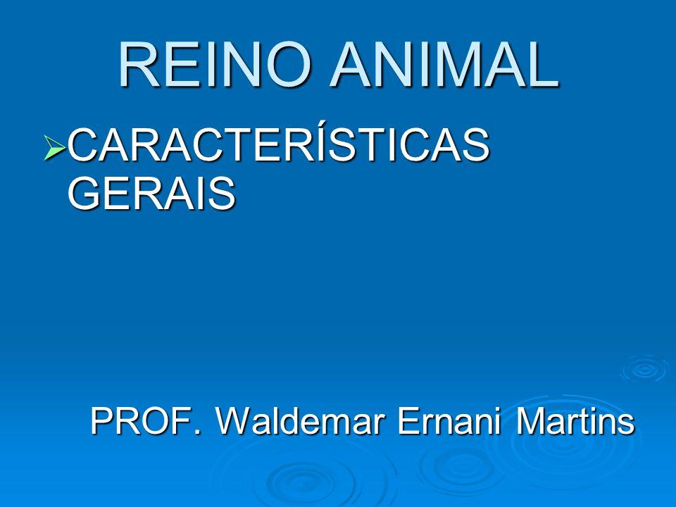 REINO ANIMAL CARACTERÍSTICAS GERAIS PROF. Waldemar Ernani Martins