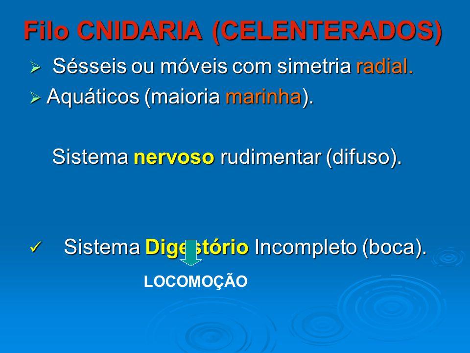 Filo CNIDARIA (CELENTERADOS)
