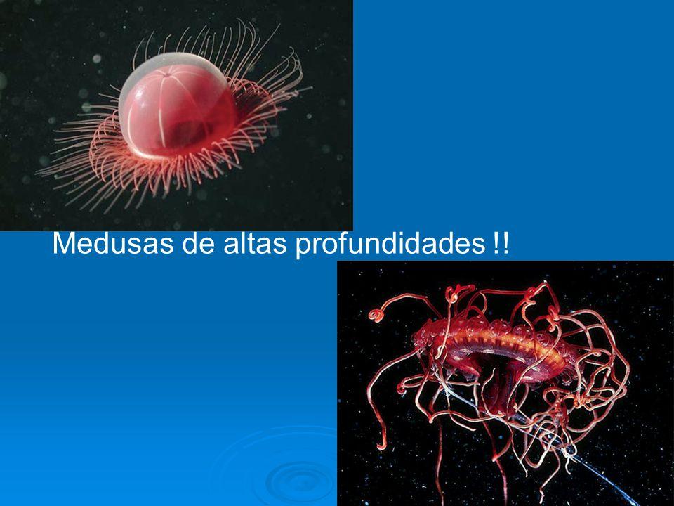 Medusas de altas profundidades !!