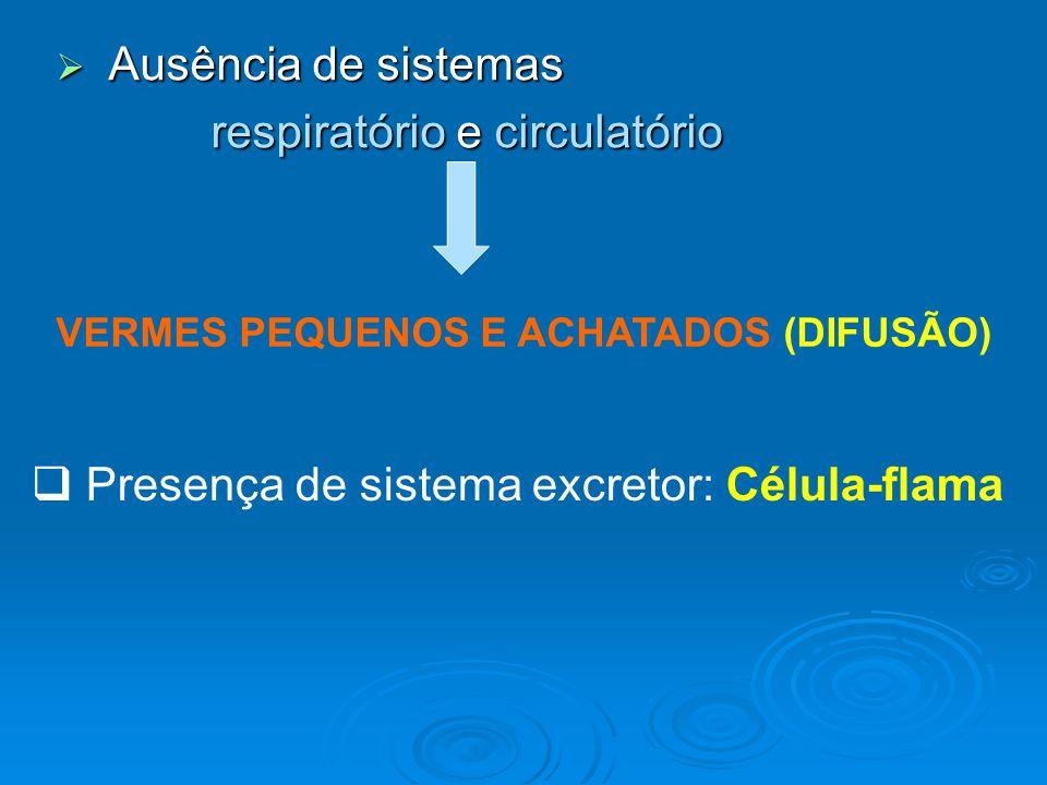 respiratório e circulatório