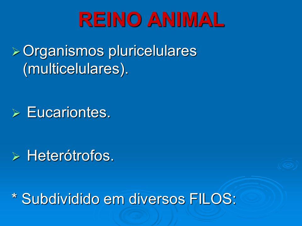 REINO ANIMAL Organismos pluricelulares (multicelulares). Eucariontes.