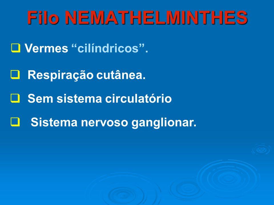 Filo NEMATHELMINTHES Vermes cilíndricos . Respiração cutânea.