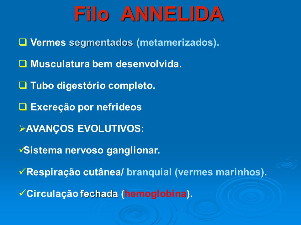 Filo ANNELIDA Vermes segmentados (metamerizados).