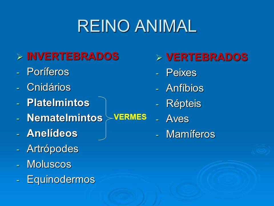 REINO ANIMAL INVERTEBRADOS VERTEBRADOS Poríferos Peixes Cnidários