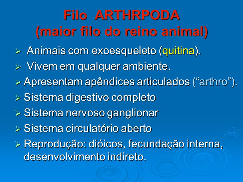 Filo ARTHRPODA (maior filo do reino animal)
