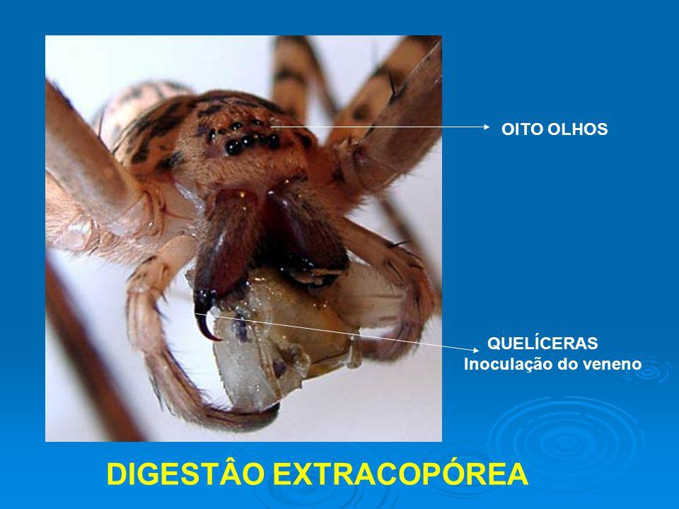 DIGESTÂO EXTRACOPÓREA