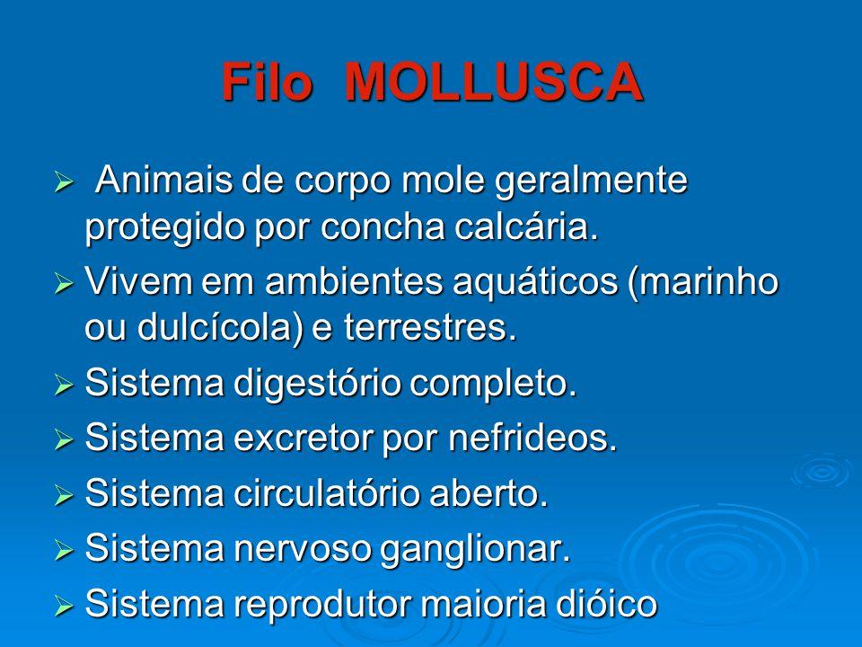 Filo MOLLUSCA Animais de corpo mole geralmente protegido por concha calcária. Vivem em ambientes aquáticos (marinho ou dulcícola) e terrestres.