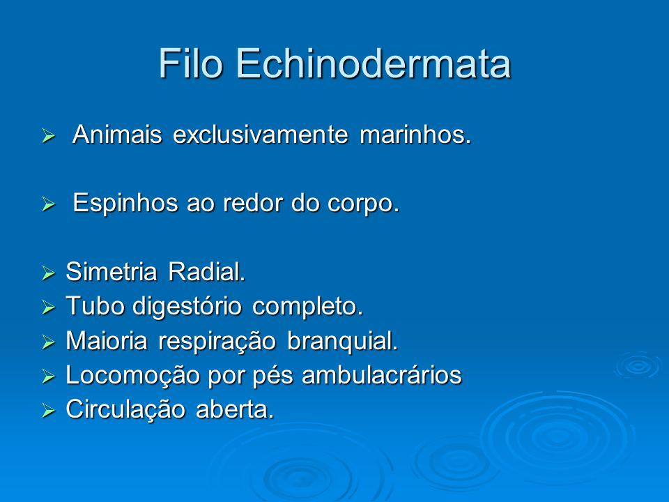 Filo Echinodermata Animais exclusivamente marinhos.