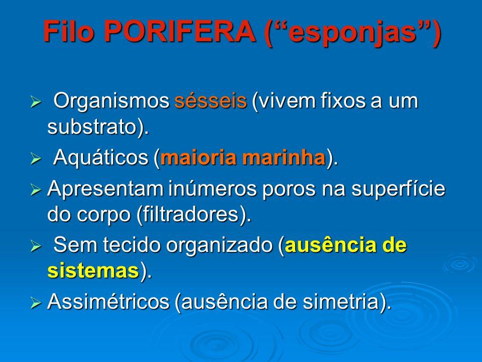 Filo PORIFERA ( esponjas )