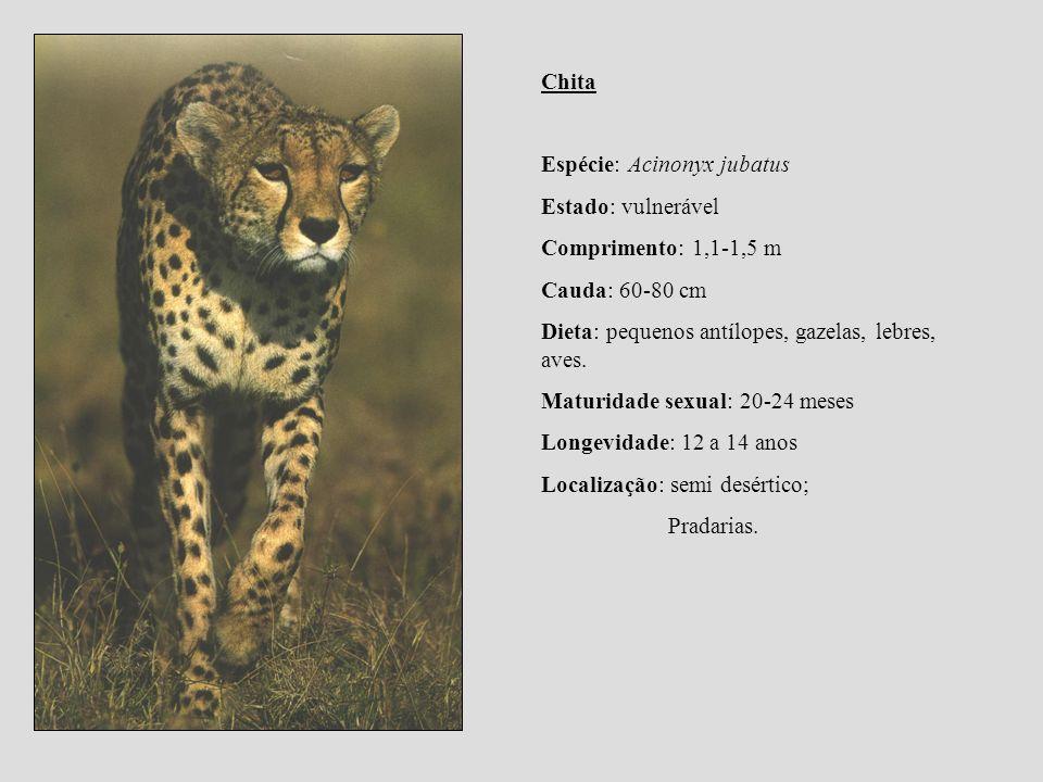 Chita Espécie: Acinonyx jubatus. Estado: vulnerável. Comprimento: 1,1-1,5 m. Cauda: 60-80 cm. Dieta: pequenos antílopes, gazelas, lebres, aves.