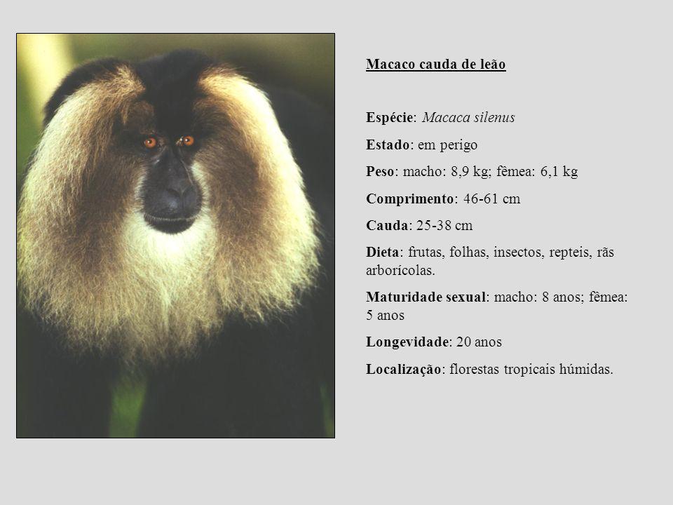 Macaco cauda de leão Espécie: Macaca silenus. Estado: em perigo. Peso: macho: 8,9 kg; fêmea: 6,1 kg.