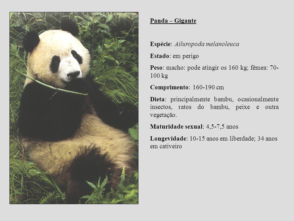 Panda – Gigante Espécie: Ailuropoda melanoleuca. Estado: em perigo. Peso: macho: pode atingir os 160 kg; fêmea: 70-100 kg.