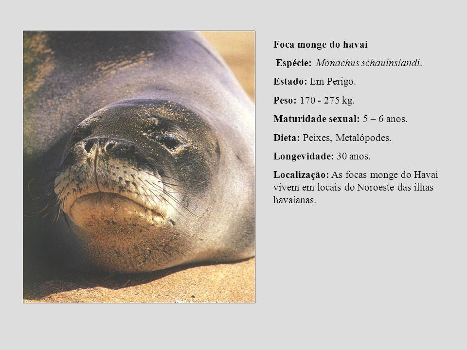 Foca monge do havai Espécie: Monachus schauinslandi. Estado: Em Perigo. Peso: 170 - 275 kg. Maturidade sexual: 5 – 6 anos.