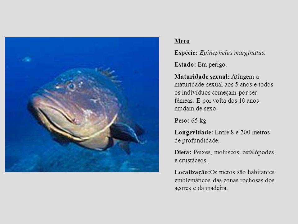 Mero Espécie: Epinephelus marginatus. Estado: Em perigo.