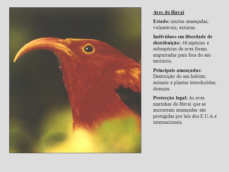Aves do HavaiEstado: muitas ameaçadas, vulneráveis, extintas.