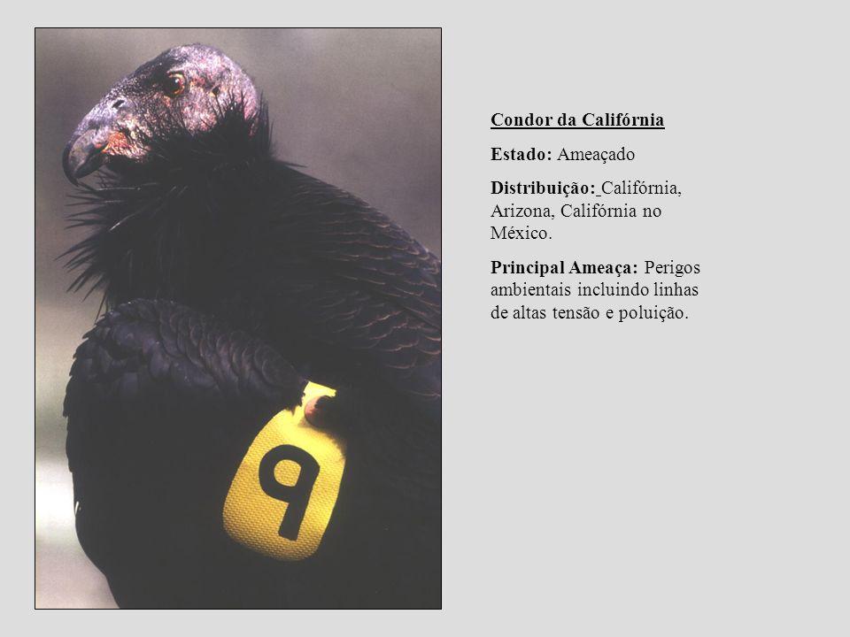 Condor da CalifórniaEstado: Ameaçado. Distribuição: Califórnia, Arizona, Califórnia no México.
