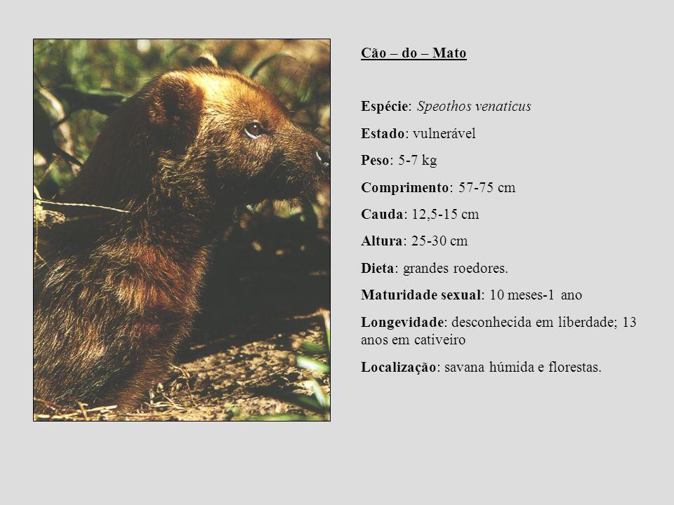 Cão – do – Mato Espécie: Speothos venaticus. Estado: vulnerável. Peso: 5-7 kg. Comprimento: 57-75 cm.