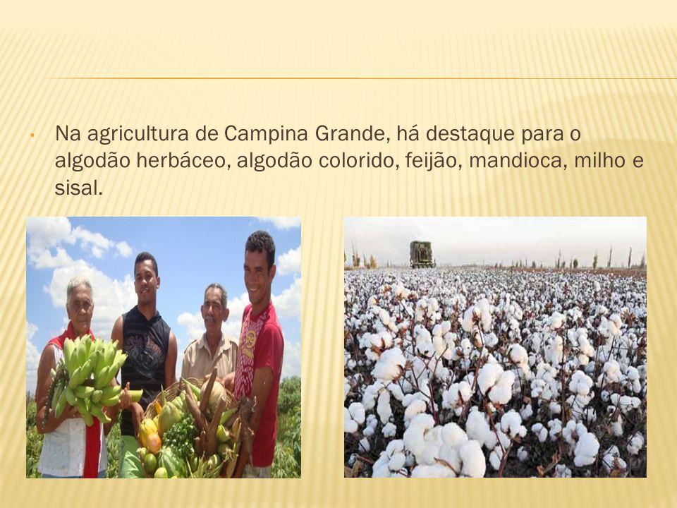 Na agricultura de Campina Grande, há destaque para o algodão herbáceo, algodão colorido, feijão, mandioca, milho e sisal.