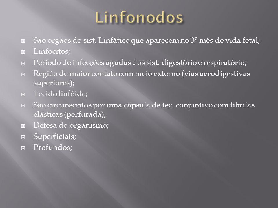 Linfonodos São orgãos do sist. Linfático que aparecem no 3º mês de vida fetal; Linfócitos;