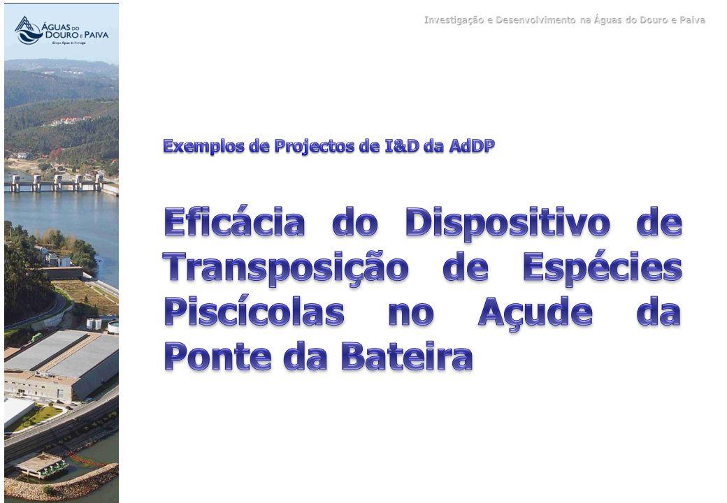 Investigação e Desenvolvimento na Águas do Douro e Paiva