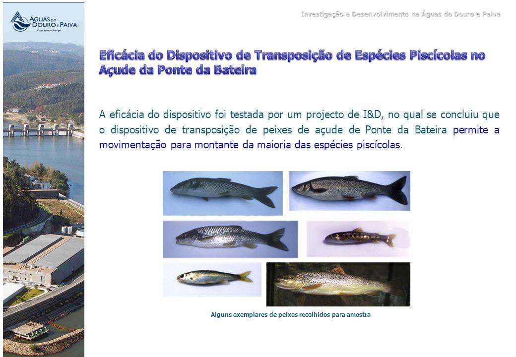 Alguns exemplares de peixes recolhidos para amostra