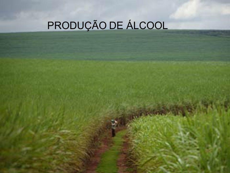 PRODUÇÃO DE ÁLCOOL