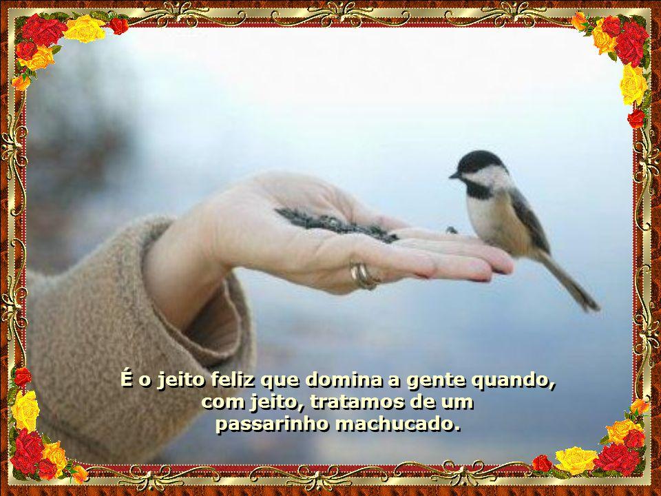 É o jeito feliz que domina a gente quando, com jeito, tratamos de um passarinho machucado.