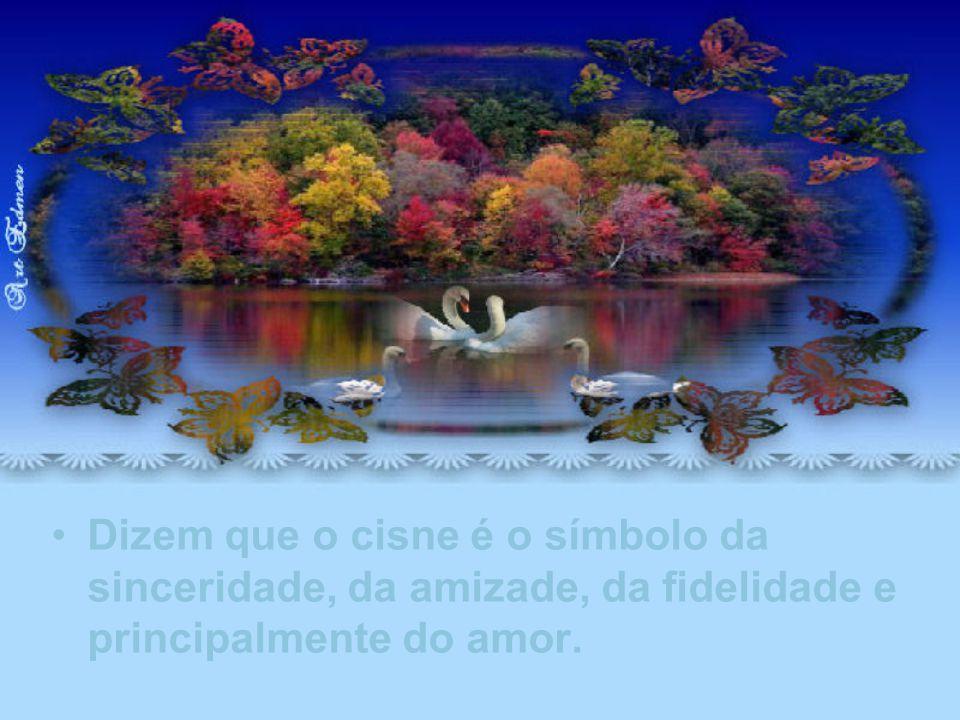 Dizem que o cisne é o símbolo da sinceridade, da amizade, da fidelidade e principalmente do amor.