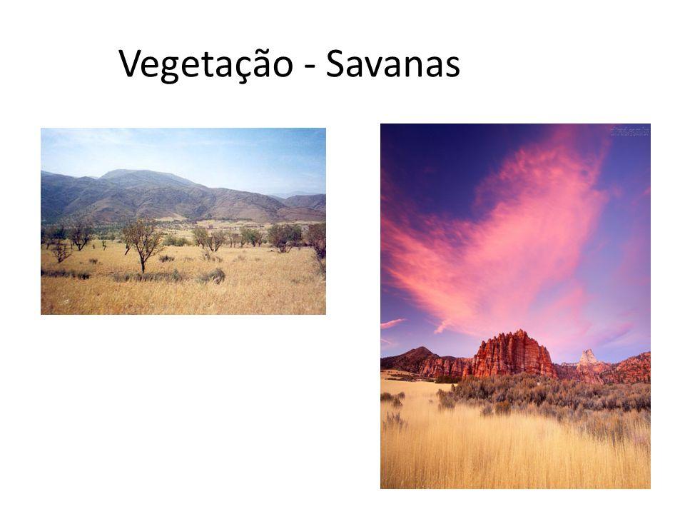 Vegetação - Savanas