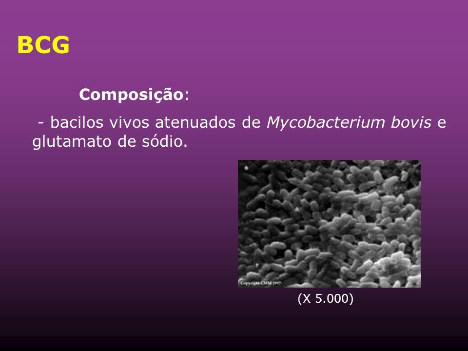 BCG Composição: - bacilos vivos atenuados de Mycobacterium bovis e glutamato de sódio. (X 5.000)