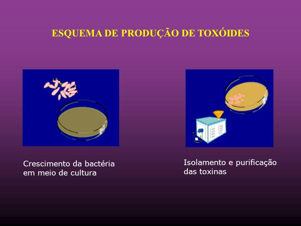 ESQUEMA DE PRODUÇÃO DE TOXÓIDES