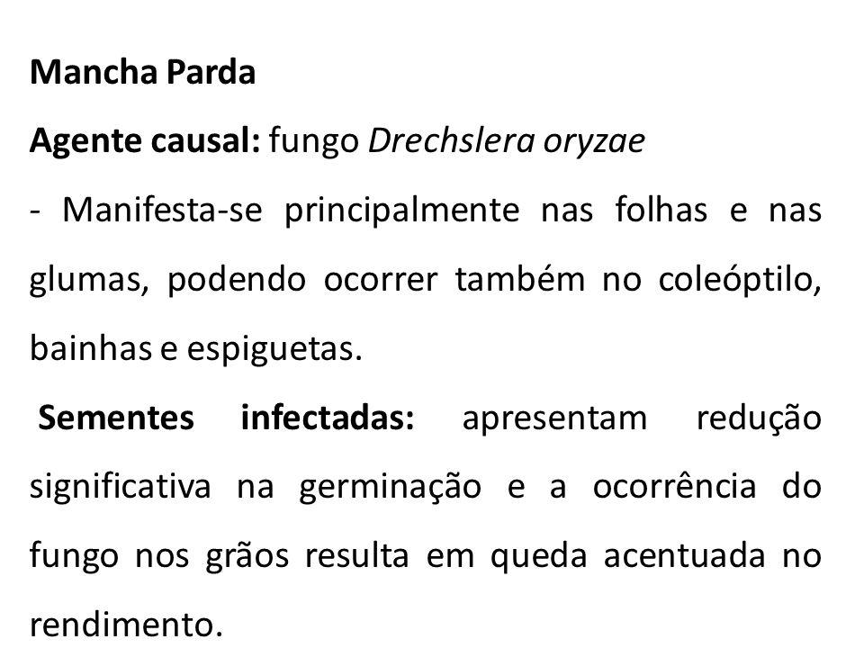 Mancha Parda Agente causal: fungo Drechslera oryzae.