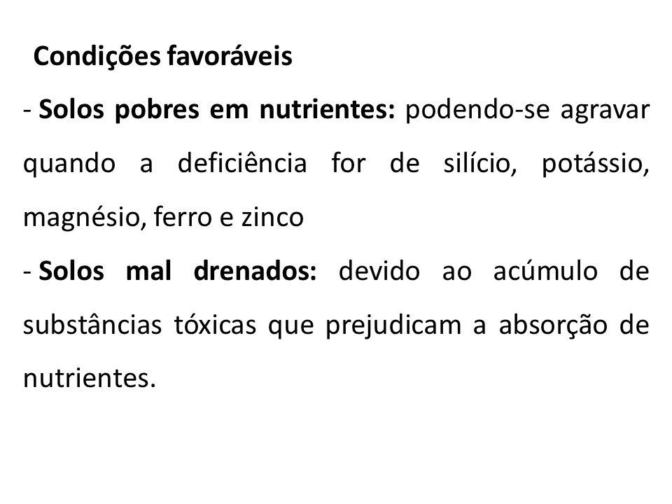 Condições favoráveis Solos pobres em nutrientes: podendo-se agravar quando a deficiência for de silício, potássio, magnésio, ferro e zinco.