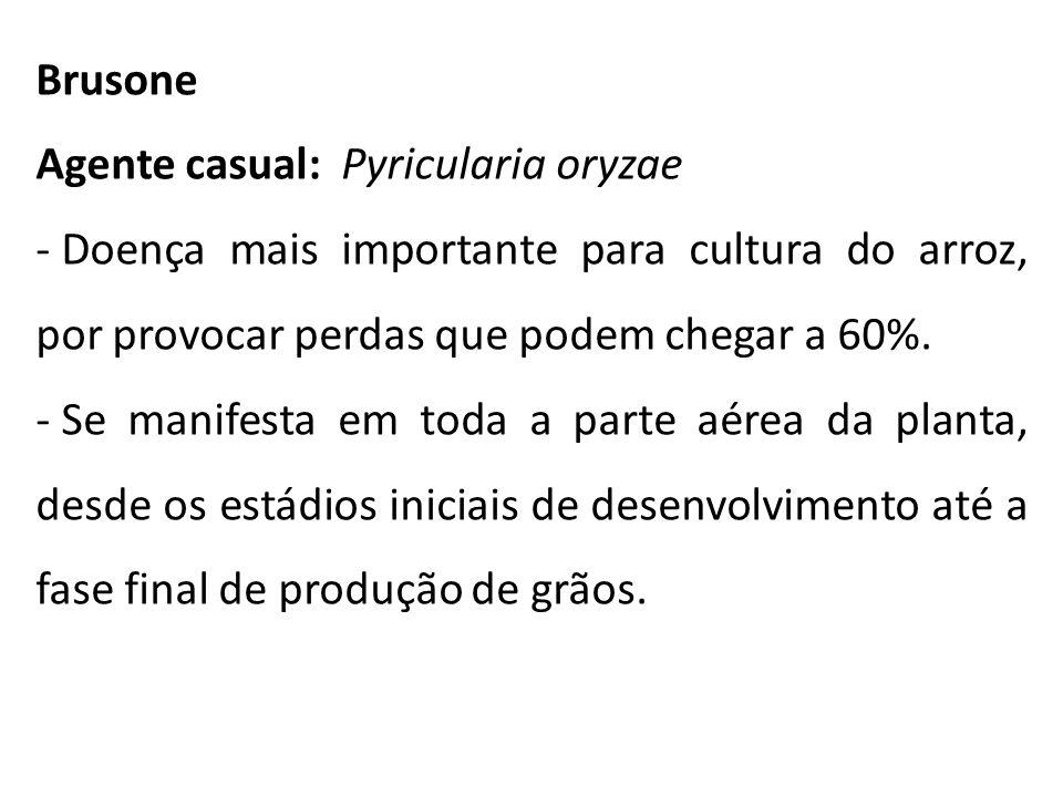 Brusone Agente casual: Pyricularia oryzae. Doença mais importante para cultura do arroz, por provocar perdas que podem chegar a 60%.