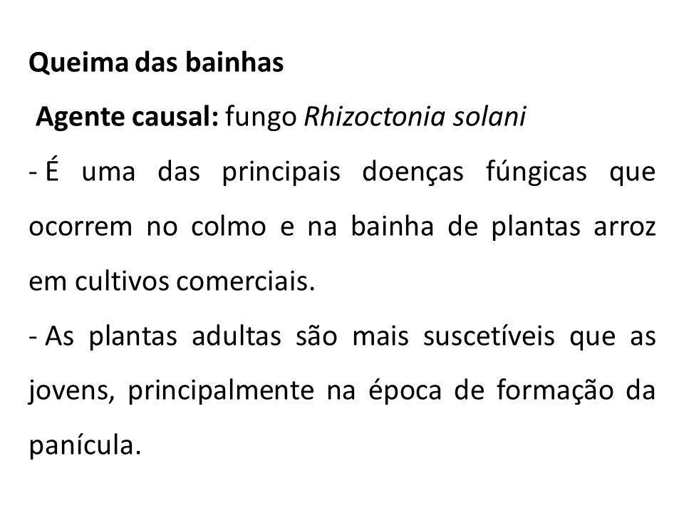 Queima das bainhas Agente causal: fungo Rhizoctonia solani.
