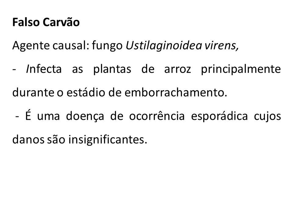 Falso Carvão Agente causal: fungo Ustilaginoidea virens, - Infecta as plantas de arroz principalmente durante o estádio de emborrachamento.