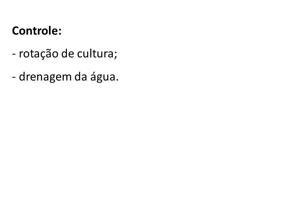 Controle: rotação de cultura; drenagem da água.