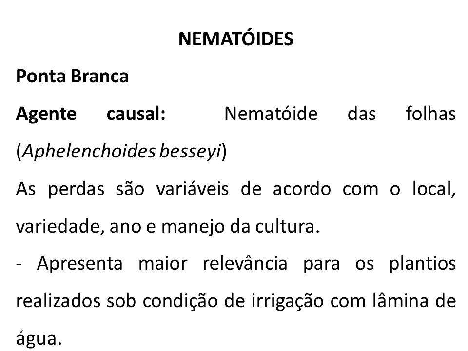 NEMATÓIDES Ponta Branca