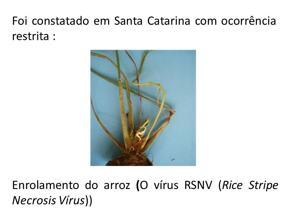 Foi constatado em Santa Catarina com ocorrência restrita :