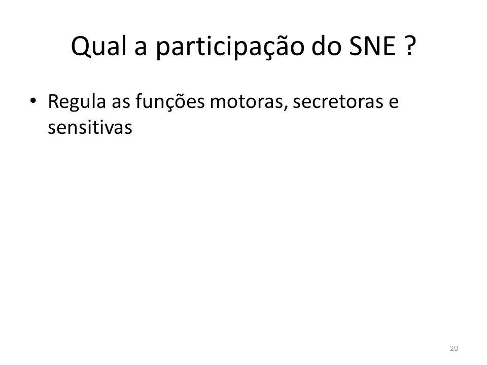 Qual a participação do SNE
