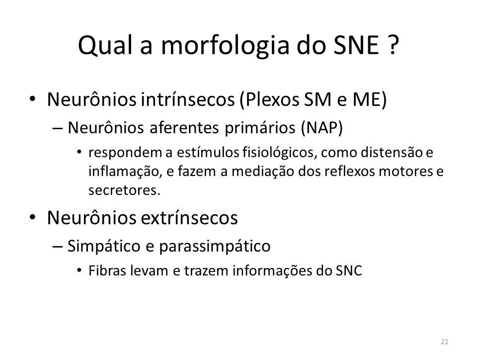 Qual a morfologia do SNE