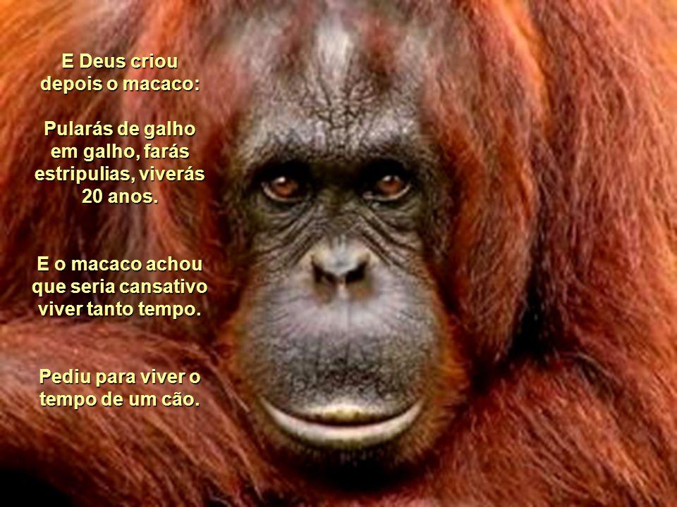 E Deus criou depois o macaco: